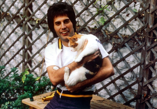freddie-with-cat