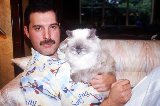 Freddie Mercury with cat