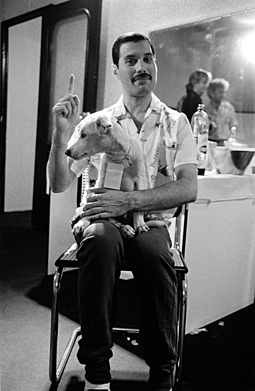freddie-mercury-with-dog_madrid_1986