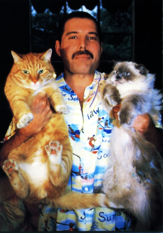 freddie-with-cats
