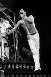 Wembley Arena, 1980