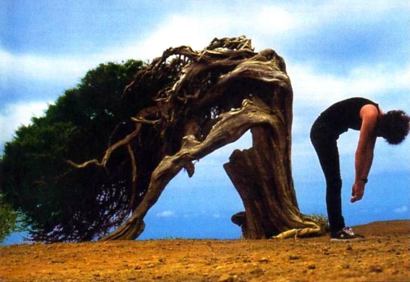 Brian May na wyspie El Hierro, od lewej: jałowiec (Juniperus phoenicea) i Brian May; fot.: Richard Gray (zdjęcie pochodzi z okładki albumu Another World)